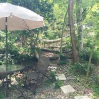 木漏れ日の射す庭で