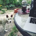 庭でお仕事中、レオがやってきた。