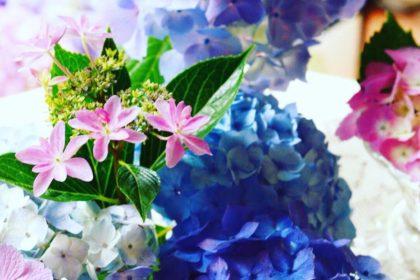エコズデザイン_紫陽花活用法