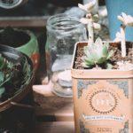 紅茶缶を植木鉢に。